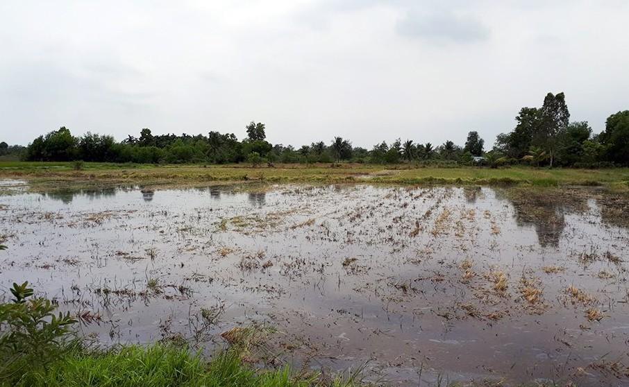 Một ngày ở điểm sốt đất Quận 9 Sài Gòn - ảnh 2