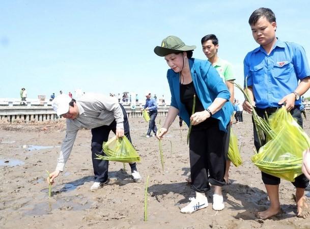 Chủ tịch Quốc hội tham gia trồng cây ở xóm Mũi, xã Đất Mũi. Ảnh: TTXVN