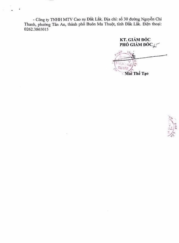 Đấu giá cây cao su thanh lý tại Đắk Lắk - ảnh 3
