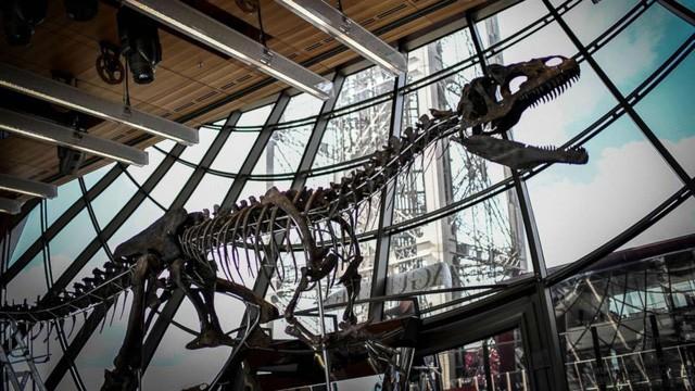 Bộ xương của một con khủng long ăn thịt được trưng bày trong buổi đấu giá ở tầng một của Tháp Eiffel, Paris ngày 2/6 vừa qua. (Nguồn: ABC News)