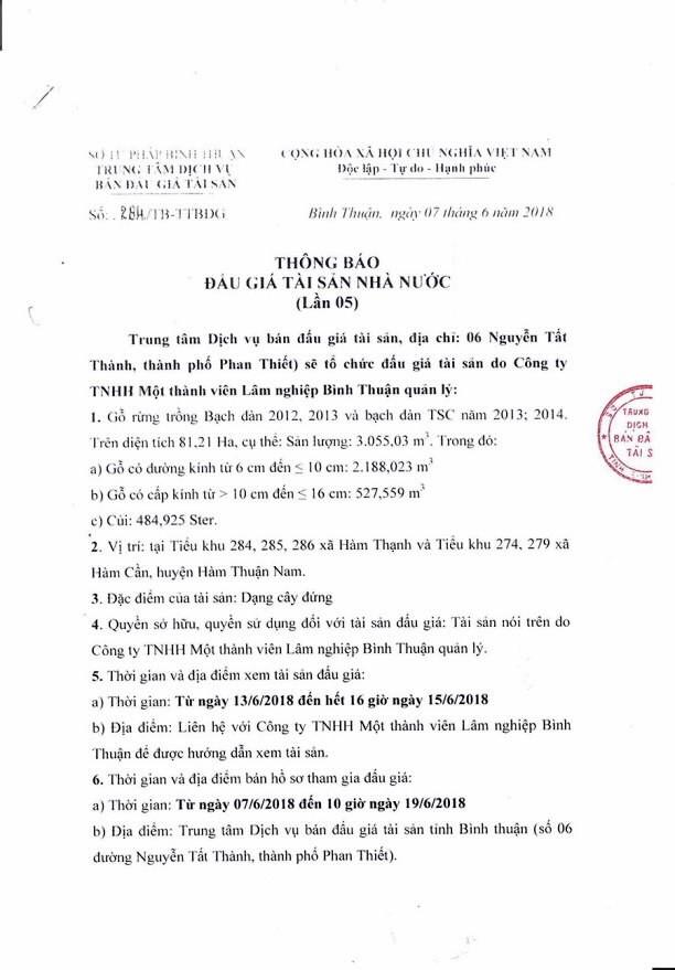 Đấu giá gỗ rừng trồng bạch đàn tại Bình Thuận - ảnh 1