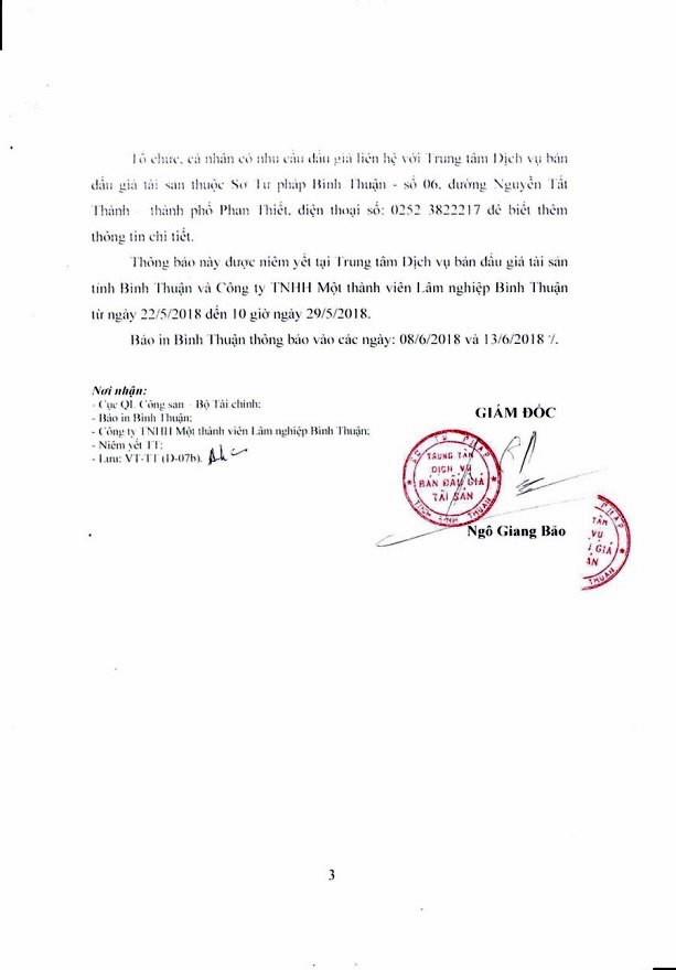 Đấu giá gỗ rừng trồng bạch đàn tại Bình Thuận - ảnh 3