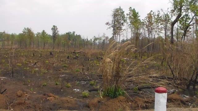 """Gia Lai: Ban quản lý để mất, cháy 360 ha rừng, lập khống """"chiếm đoạt"""" hàng tỷ đồng - ảnh 1"""