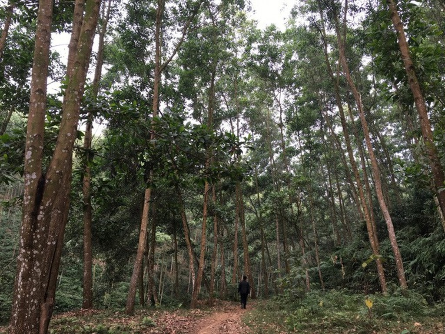 Các doanh nghiệp của Tổng công ty Giấy tại Phú Thọ bị thu hồi hơn 3000 m2 đất