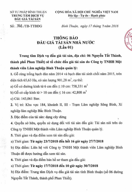 Đấu giá gỗ bạch đàn tại Bình Thuận - ảnh 1