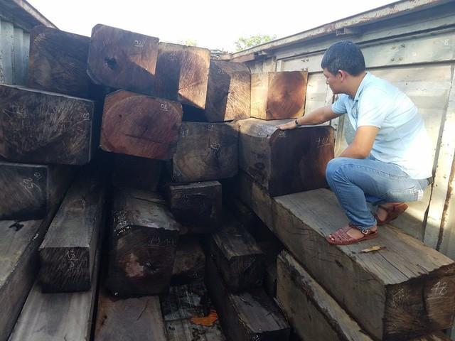 Gần 50m3 gỗ lậu bị thu giữ