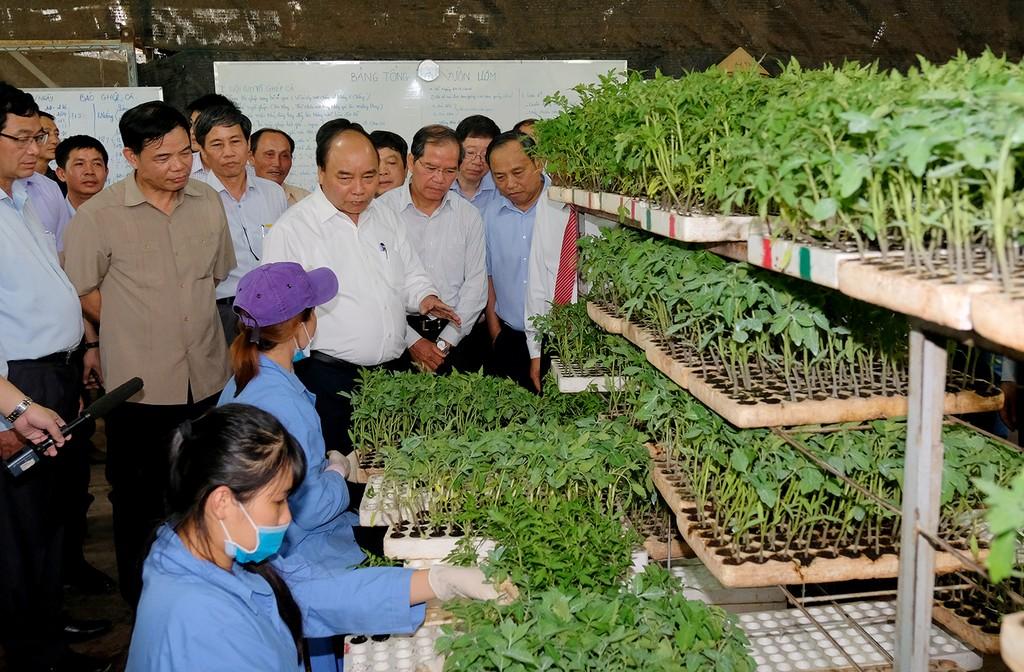 Thủ tướng thăm mô hình nông nghiệp sạch tại Lâm Đồng - ảnh 1