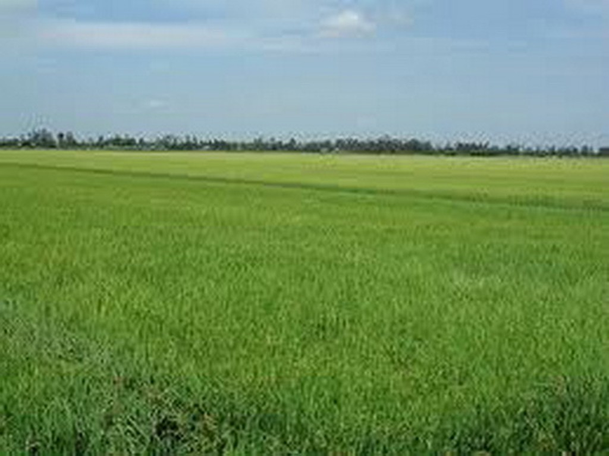 Đến 2020, tỉnh Bình Định có 51.002 ha đất trồng lúa