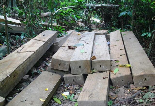 Bình Định: Khởi tố vụ 23 cây dổi lâu năm bị đốn hạ không thương tiếc - ảnh 3