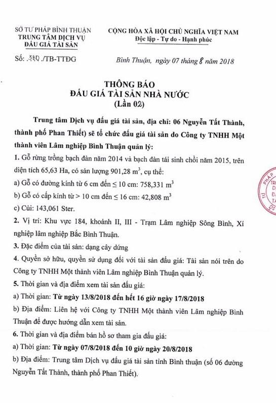 Ngày 23/8 đấu giá gỗ rừng trồng bạch đàn tại Bình Thuận - ảnh 1