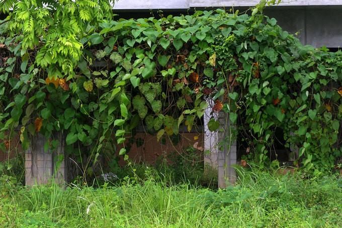 Khu đô thị nghìn tỷ ở Hà Nội bị bỏ hoang nhiều năm - ảnh 6