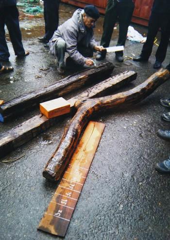 Ba cựu công chức hải quan lãnh án vụ buôn lậu gỗ 63 tỷ đồng - ảnh 1