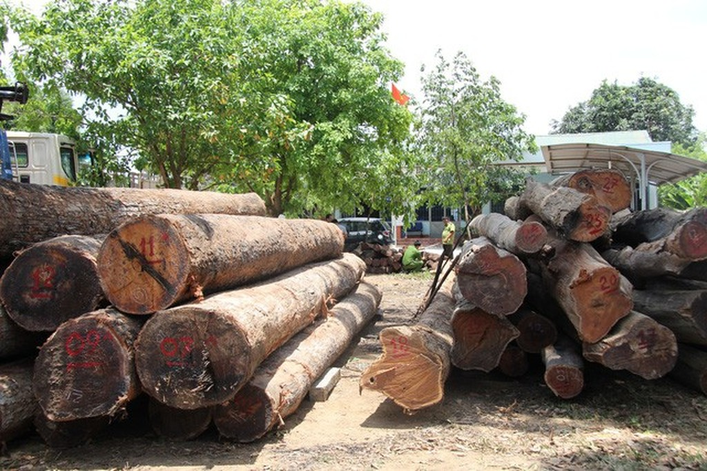 Đắk Lắk: Vụ bắt Hạt trưởng Kiểm lâm: Chi cục trưởng Kiểm lâm tự nguyện giao nộp 8m3 gỗ - ảnh 1