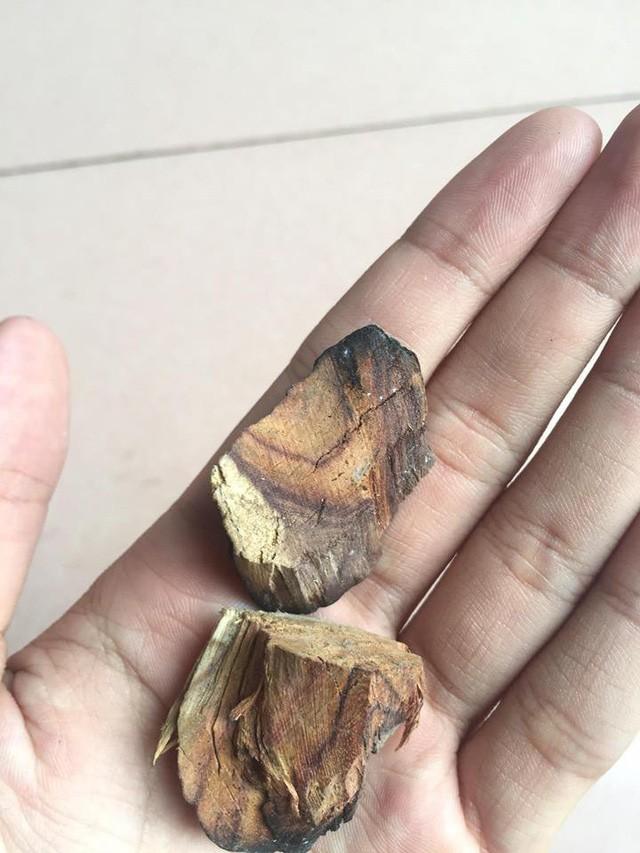 15 năm buôn gỗ sưa vẫn bị lừa mất trắng cả tỷ bạc - ảnh 2