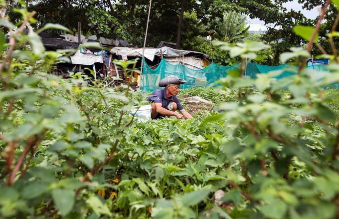 Hiện trạng 4,3 ha đất bị thu hồi sai ở Khu đô thị Thủ Thiêm - ảnh 3
