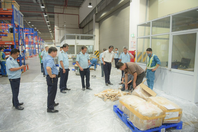 Bắt giữ gần 1 tấn ngà voi và vẩy tê tê tại cảng hàng không Nội Bài - ảnh 4