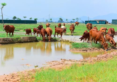 Một dự án chậm triển khai tại huyện Mê Linh giờ cỏ mọc đầy
