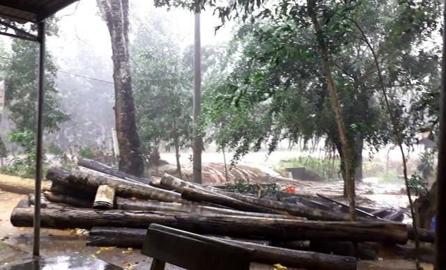 Tỉnh uỷ Bình Phước yêu cầu điều tra vụ phá rừng nghiêm trọng - ảnh 2