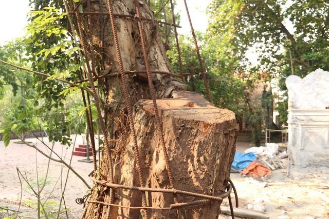 """Chi hơn 20 tỷ mua gỗ sưa đỏ, đại gia Bắc Ninh """"còng lưng"""" trả nợ suốt 8 năm - ảnh 1"""