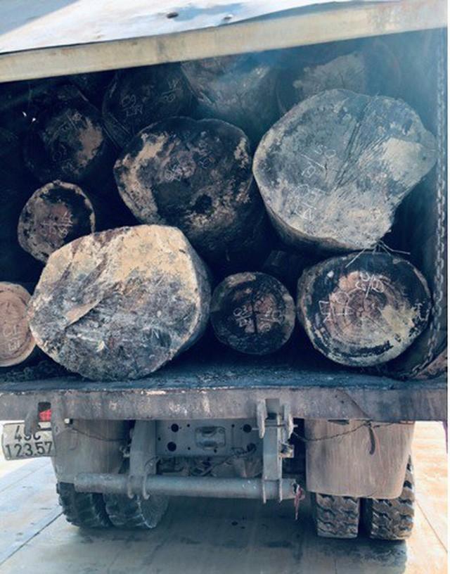Kon Tum: Phục kích bắt 3 xe tải chở hơn 40 khối gỗ lậu bằng sà lan trên bến Sê San - ảnh 1