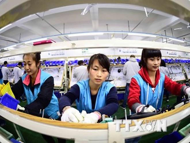 Công nhân làm việc tại nhà máy ở Rushan, tỉnh Sơn Đông, miền Đông Trung Quốc ngày 12/11/2015. (Nguồn: THX/TTXVN)