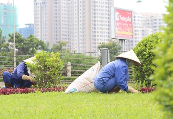 Chi phí cho việc cắt cỏ, cắt tỉa cây hoa cảnh tại đại lộ Thăng Long đang thu hút sự quan tâm dư luận. Ảnh: Ngọc Thành.