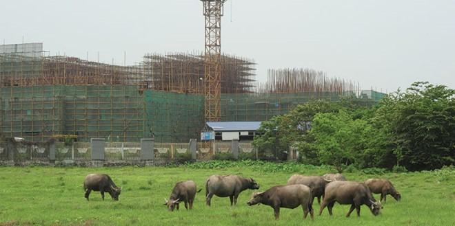 Nhiều dự án chậm nộp tiền sử dụng đất, một phần do chính sách còn mập mờ. Ảnh: Dũng Minh
