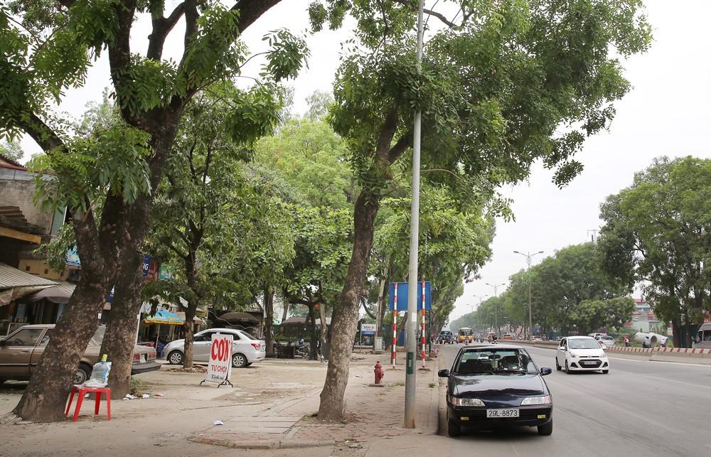 Hàng cây xà cừ trên đường Phạm Văn Đồng khiến dư luận xôn xao trong những ngày đầu tháng 6/2017. Ảnh: Nhã Chi
