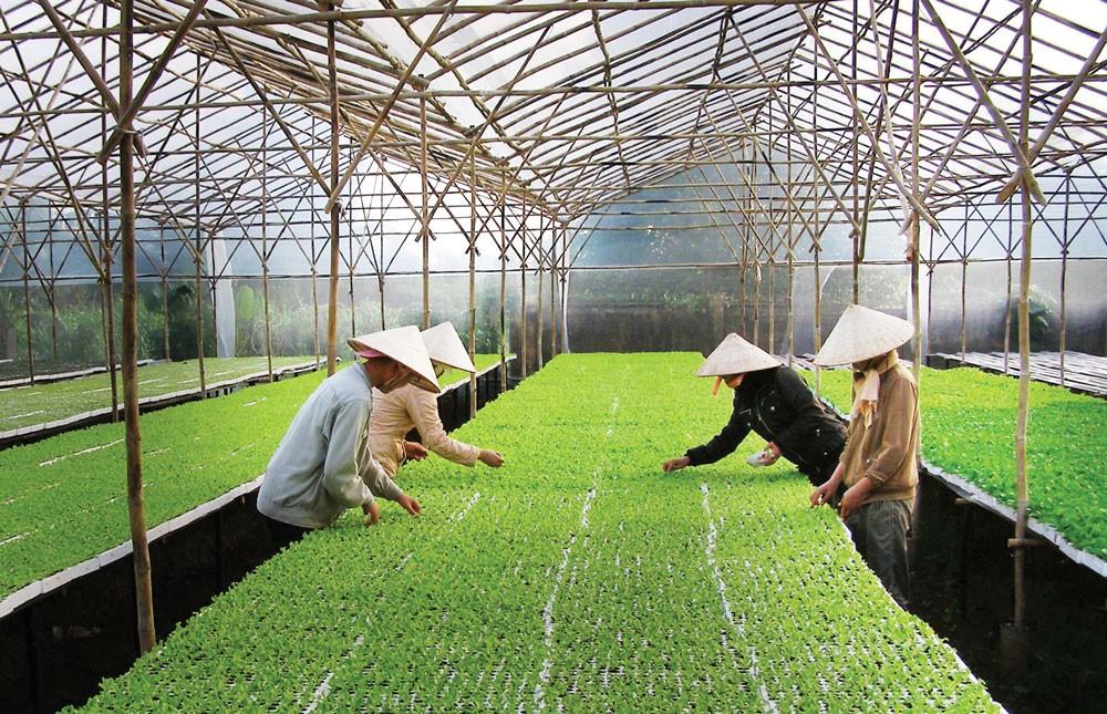 Doanh nghiệp nông nghiệp công nghệ cao cần tự mình có phương án đầu tư, kinh doanh tốt để vay vốn ngân hàng. Ảnh: Lê Tiên