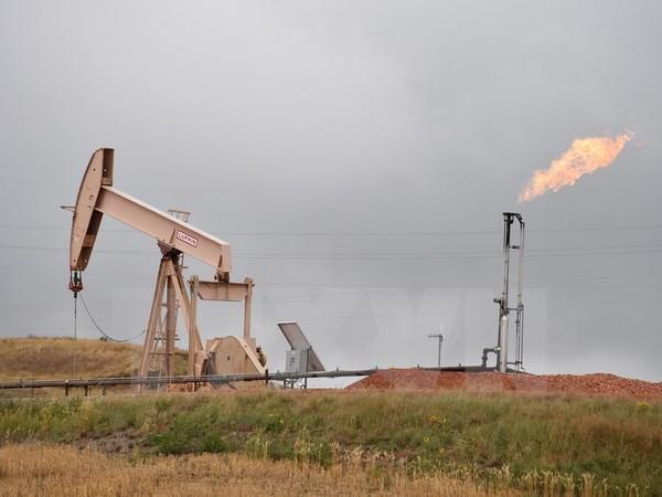Hệ thống khai thác dầu mỏ gần Williston, North Dakota, Mỹ. (Nguồn: AFP/TTXVN)