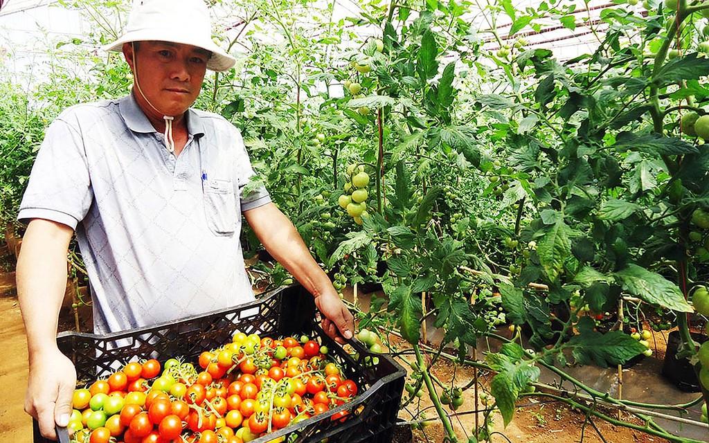 Nhiều doanh nghiệp vẫn còn e ngại khi đầu tư vào lĩnh vực nông nghiệp công nghệ cao do chính sách chưa đủ mạnh. Ảnh: HT