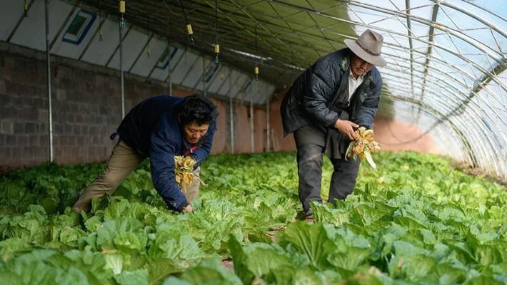 Một trang trại trồng rau ở Trung Quốc - Ảnh: Xinhua.