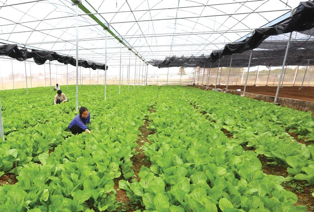 Việt Nam có nhiều chính sách riêng lẻ đề cập đến tăng trưởng xanh nhưng vẫn thiếu tiêu chí cụ thể để lồng ghép trong thực hiện. Ảnh: Huấn Anh