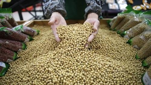 Công nhân một siêu thị tại Vũ Hán (Trung Quốc) đang kiểm tra đậu nành. Ảnh:Reuters