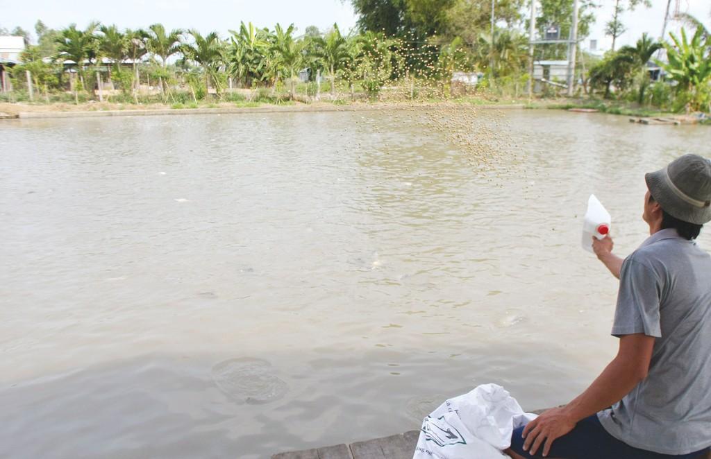 Các bị cáo đã phát hành 6 văn bản giả mạo cấp phép cho 946 sản phẩm thức ăn thủy sản, sản phẩm xử lý cải tạo môi trường. Ảnh: Tường Lâm