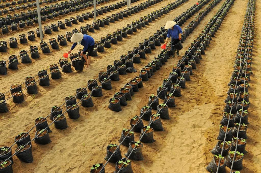 HAGL Agrico hiện trồng 18 loại cây ăn trái khác nhau trên diện tích 13.524 ha, mang về 63% doanh thu cho Công ty trong quý I/2018. Ảnh: Hoàng Anh
