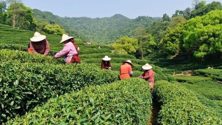 Alibaba bắt đầu đưa trí tuệ nhân tạo vào nông nghiệp
