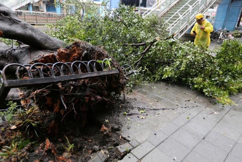 Hình ảnh tan hoang sau khi siêu bão Maria đổ bộ Trung Quốc - ảnh 3