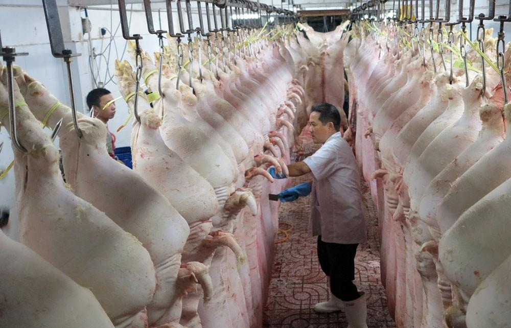 Việt Nam đang duy trì năng lực sản xuất bình quân 27 triệu con lợn mỗi năm, đứng thứ 3 thế giới về số lượng đầu lợn. Ảnh: Quang Đức
