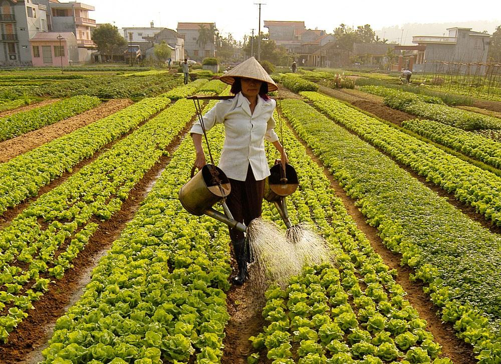 Đầu tư vào nông nghiệp vẫn chưa tương xứng với tiềm năng của quốc gia và chưa thật sự bền vững, hiệu quả. Ảnh: Tường Lâm