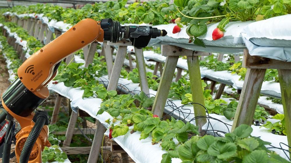 Tại Việt Nam, cơ hội cho startup công nghệ ở lĩnh vực nông nghiệp là rất rộng mở