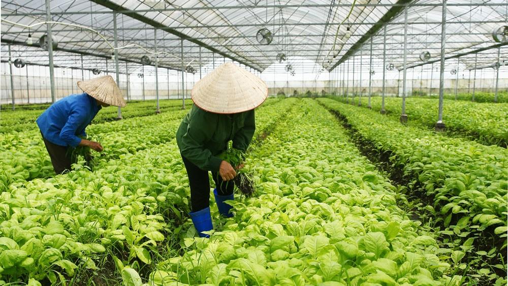 Việt Nam ưu tiên thu hút đầu tư công nghệ cao vào hạ tầng giao thông, năng lượng; công nghiệp chế tạo; nông nghiệp chất lượng cao…. Ảnh: Lê Tiên