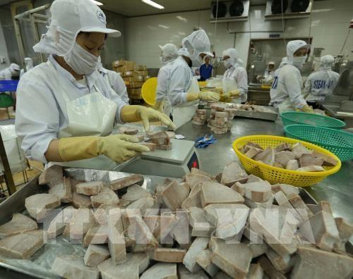 Chế biến sản phẩm cá ngừ đông lạnh xuất khẩu tại nhà máy của Công ty Cổ phần Thủy sản Bình Định. Ảnh: Vũ Sinh/TTXVN