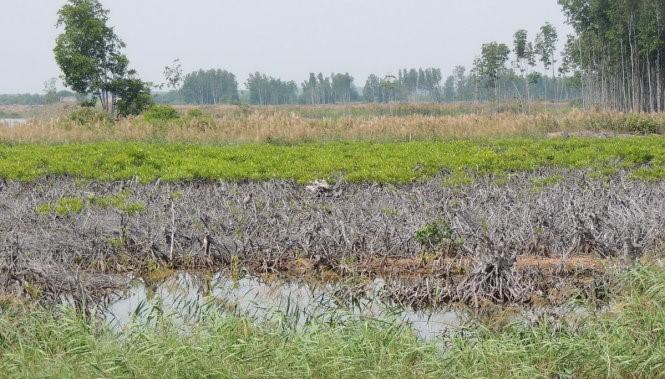 Rừng đặc dụng tại huyện Thạnh Phú, tỉnh Bến Tre - Ảnh: Châu Thành