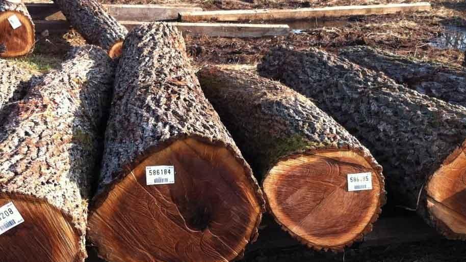 Đấu giá gỗ xẻ, tròn nhóm IV, V, VII tại TP Kon Tum, Kon Tum
