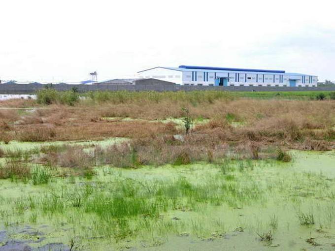 Đất lúa chiếm phần lớn diện tích đất bị thu hồi cho 11 dự án tại Bắc Ninh.