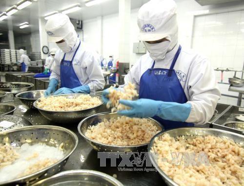 Chế biến tôm đông lạnh xuất khẩu tại Công ty Cổ phần Xuất nhập khẩu tổng hợp Giá Rai, thị xã Giá Rai (Bạc Liêu). Ảnh: TTXVN
