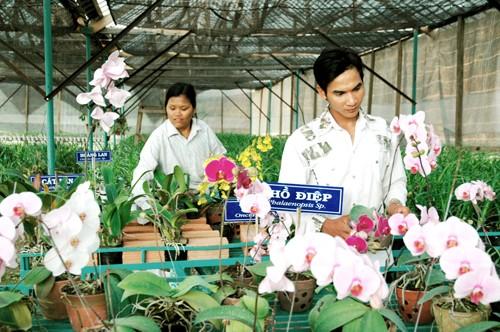 Trồng hoa xứ lạnh tại khu nông nghiệp công nghệ cao Măng Đen, huyện Kon Plông. Ảnh: VGP