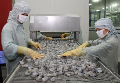 """Ngành tôm xuất khẩu có nguy cơ """"bỏ trống"""" thị trường 800 triệu USD. Ảnh: TTXVN"""