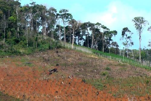 Hơn 26.000 ha đất rừng ở Đắk Lắk bị lấn chiếm trái phép. Ảnh minh họa: TTXVN